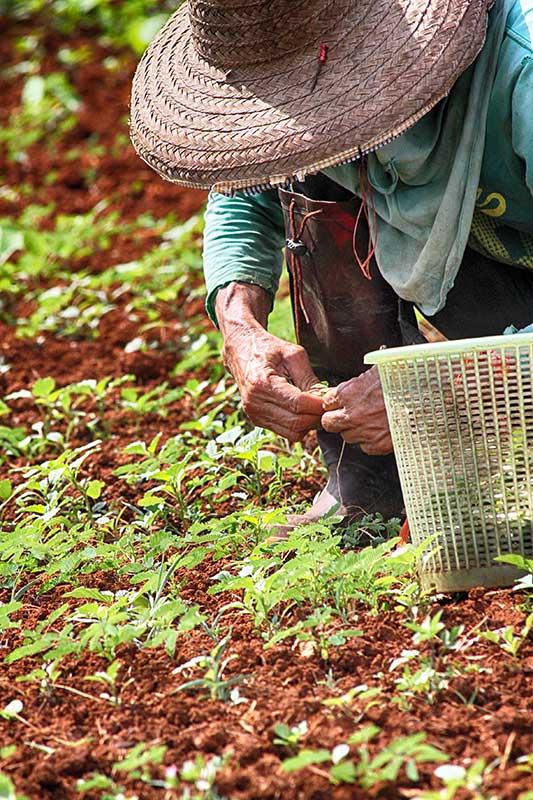 Organic Farms Chiang Mai