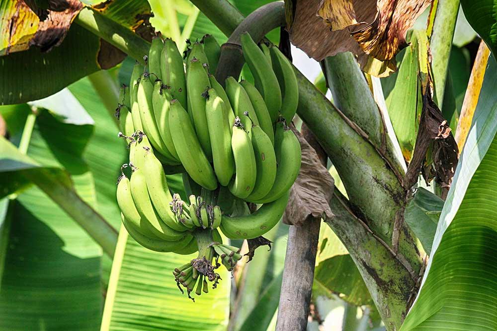 Organic fruit Chiang Mai