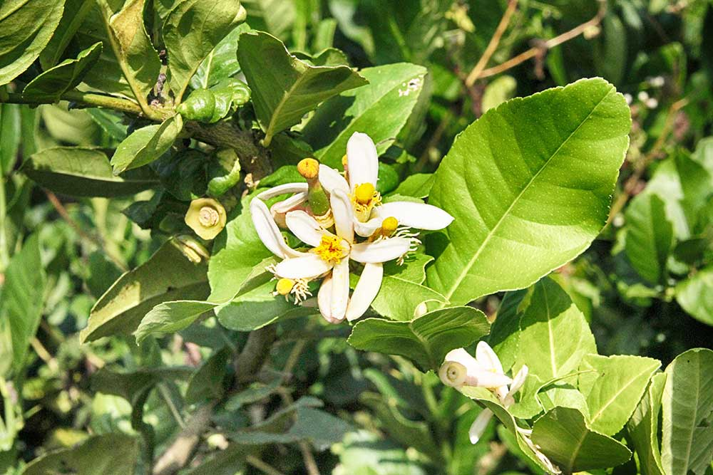 Organic flowers Chiang Mai