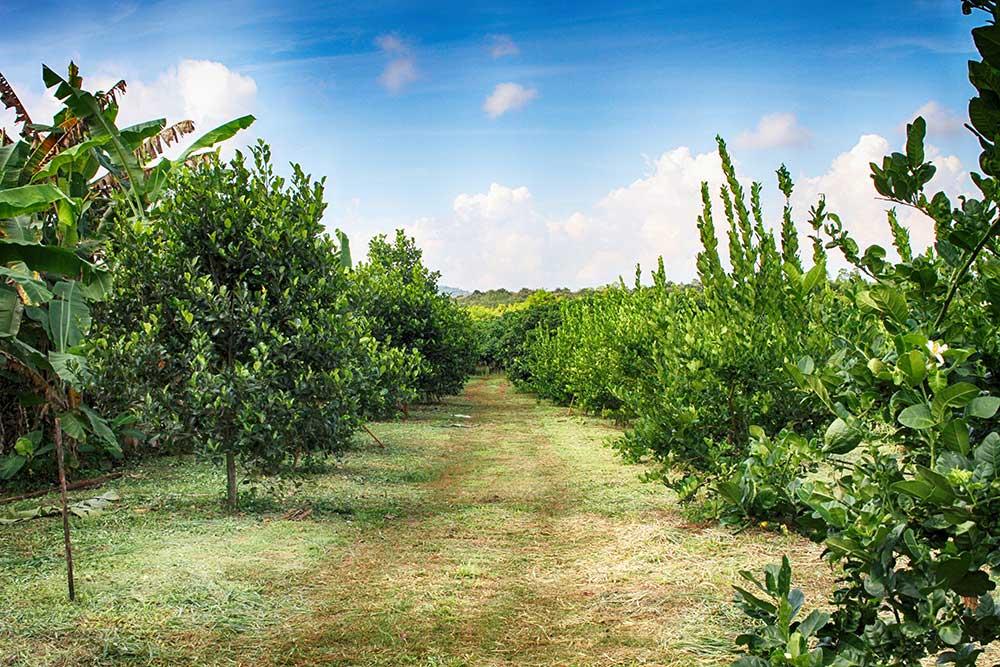 Organic farming Chiang Mai