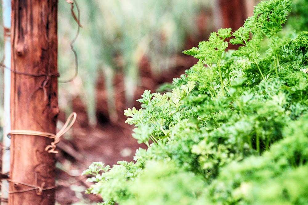 Sunny Days Organic Farms