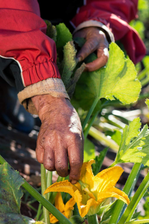 Sunny Days Organic - pricing